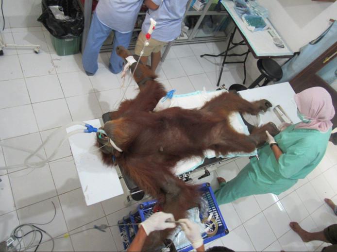 Hope werd geopereerd in het opvangcentrum, maar haar toestand blijft kritiek.