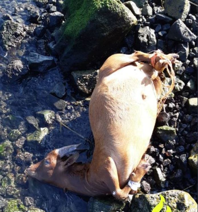 De dieren werden gevonden met de pootjes aan elkaar vastgemaakt.