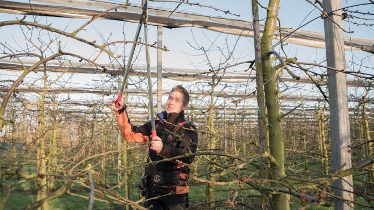 Maarten is kersenteler op Schouwen: 'De tijd rond de pluk is spannend'