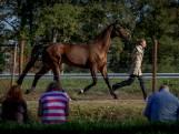 Jury keurt alle paarden voor deelname aan Military