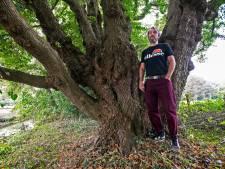 Deze boom met zeven stammen in Maarssen maakt kans op titel Boom van het Jaar: 'Hij dwingt respect af'