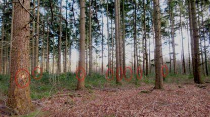 Activist strijdt tegen kap honderden naaldbomen in Ryckeveldebos