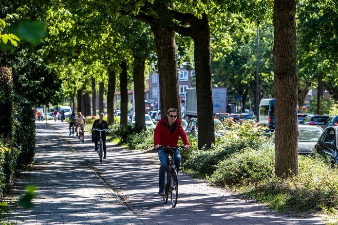 Deze statige eiken op de Margijnenenk moeten waarschijnlijk sneuvelen voor betere en bredere fietspaden.
