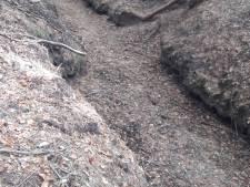 Veluwse bossen weer hartstikke droog
