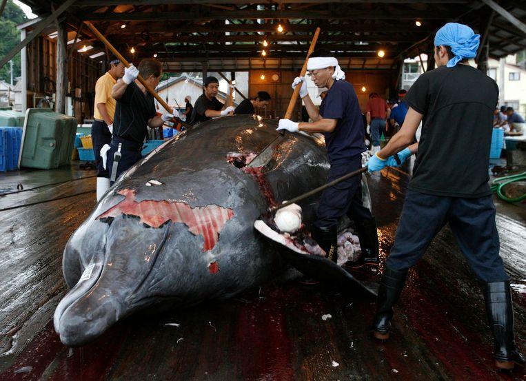 Afbeeldingsresultaat voor walvisjacht japan