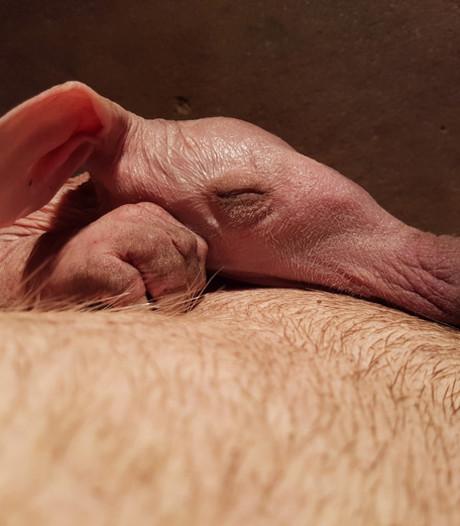 Pasgeboren aardvarken in Burger's Zoo maakt het goed