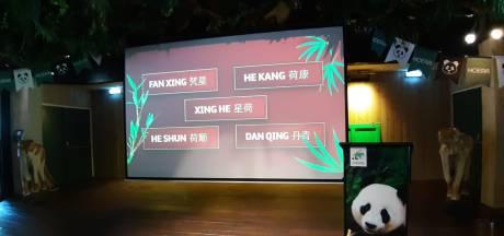 En de babypanda van Ouwehands heet... Fan Xing