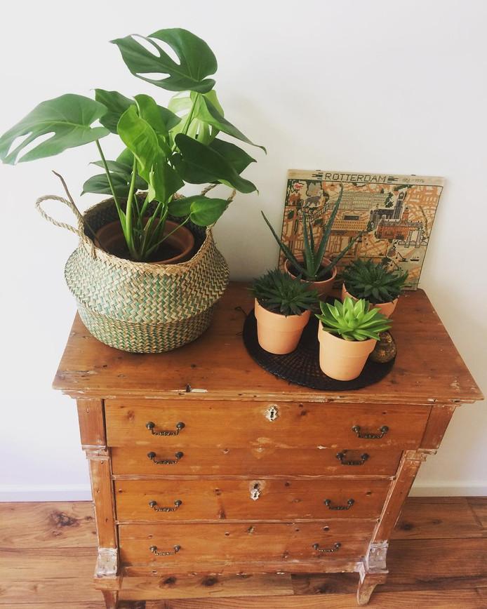 Het devies voor een interieur dat past in de trends van 2019: planten en aardetinten.