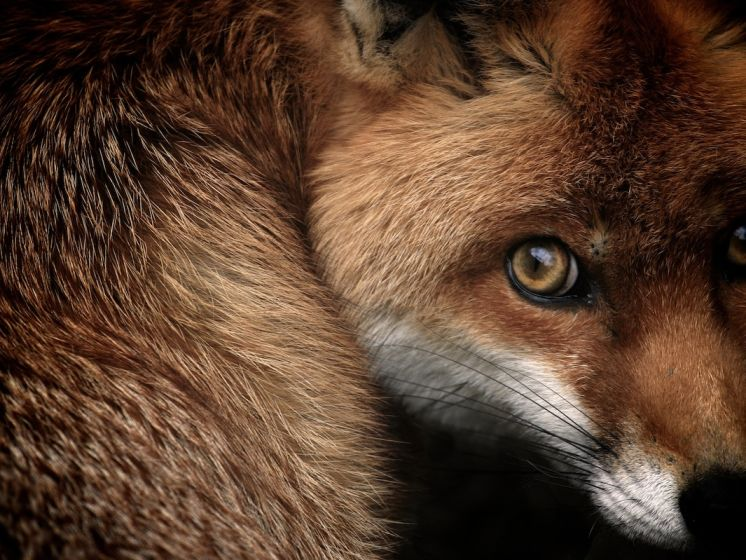 Les British Wildlife Photography Awards célèbrent 10 ans de superbes photos d'animaux