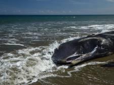 Un cachalot femelle enceinte s'échoue en Sardaigne l'estomac saturé de plastique