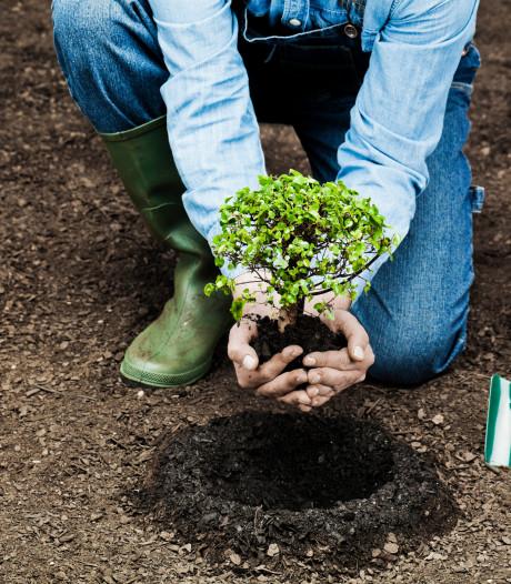 D66: een nieuwe boom voor iedere Lossernaar