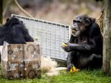Ook de dieren in Safaripark Beekse Bergen hebben een kerstdiner