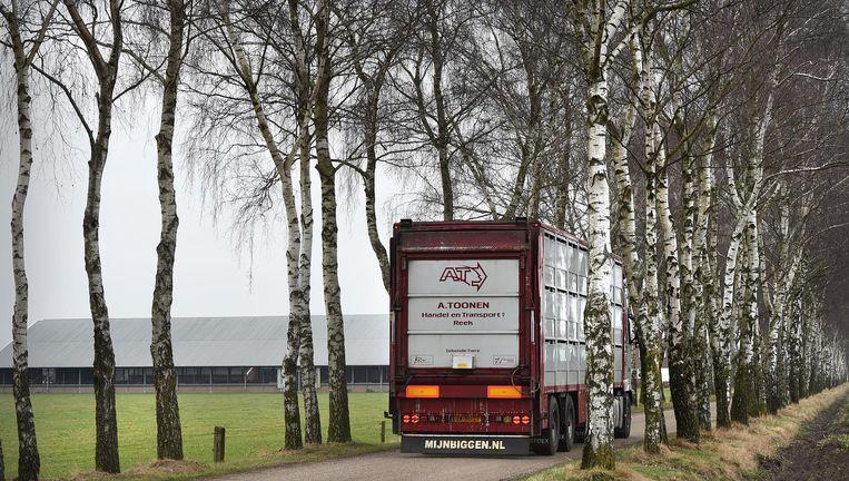 Een varkenstransportwagen passeert een veebedrijf. 'Het is hier veranderd in een agrarisch industrieterrein; ons platteland is afgepakt.' Beeld Marcel van den Bergh / de Volkskrant