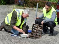 Tijgermug lijkt definitief verdwenen uit Aalten