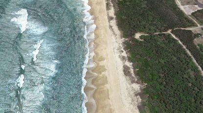 Haai doodt surfer (17) in Australië