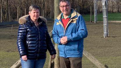 Zo voelt een ooievaar zich thuis in je tuin: 'palenbouwer' Willy (71) geeft tips