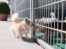 Dierenpensions stromen leeg door corona: 'Dagelijks annuleringen'