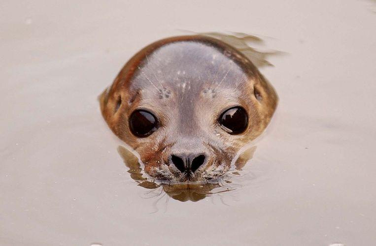 Archiefbeeld van een zeehondenpup