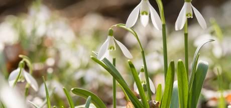 De natuur loopt drie weken voor en dat is géén goed nieuws voor hooikoortspatiënten