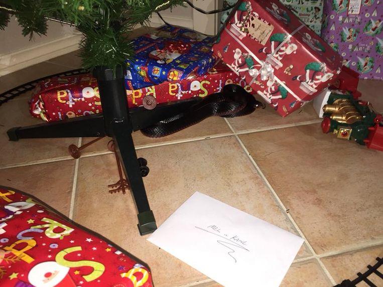 Koppel Doodsbenauwd Wanneer Ze Giftige Slang Onder Kerstboom Vinden