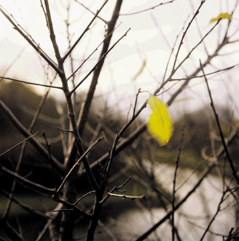 De wind is alom aanwezig en toch ongrijpbaar. (FOTO ANITA HUISMAN, TROUW ) Beeld
