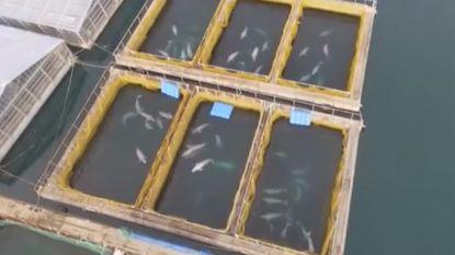 Journalist maakt beelden van geheime 'supermarkt' in Rusland waar je orka's, beloega's en zeehonden kan kopen