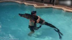 Dappere jager springt in zwembad om alligator te vangen
