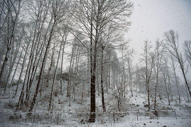 De eerste sneeuw leverde ook dit prachtige beeld op in Holsbeek.