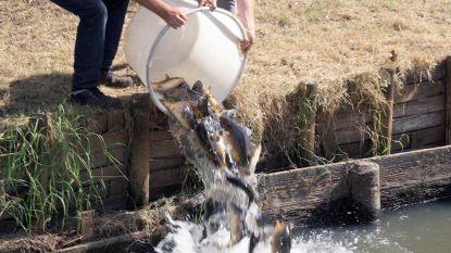 Verse vis uitgezet in Sasput