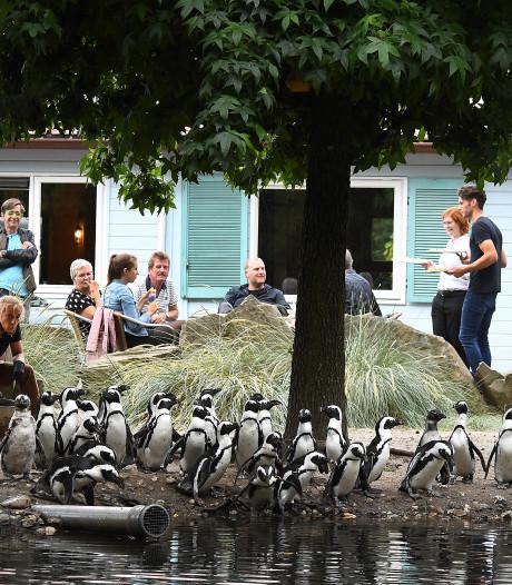 In Overloon kun je dineren bij de Afrikaanse pinguïns (en daar help je ze ook een handje mee)
