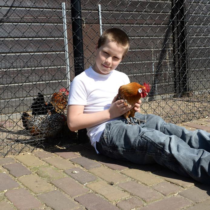 Kroelkip Goldy laat zich gewillig aaien door de kids op kinderboerderij Minnebeek.