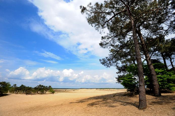 De Loonse en Drunense Duinen gaan onderdeel uitmaken van het nieuwe Van Gogh Nationaal Park, een grootschalig initiatief waarbij Natuurmonumenten en Brabants Landschap nauw betrokken zijn.