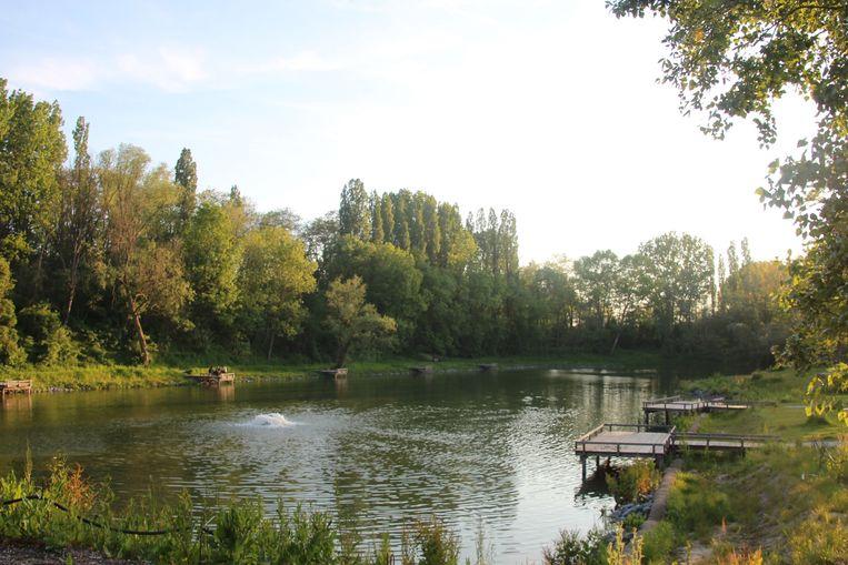 De visvijver aan het gemeentelijk domein Steenberg in Erpe-Mere werd recent heraangelegd.