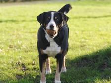 Regels honden tijdelijk strenger op Lageveld Wierden
