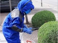 """Antwerpse brandweer vraagt om niet te snel te bellen bij wespennesten: """"De wesp heeft ook zijn nut, zoals het jagen op muggen en bladluizen"""""""