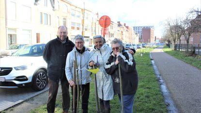 """Stadsbestuur wil meer groen in centrum en deelt gratis boompjes uit. Bewoners Stokerijstraat planten ze op... sneltramtracé: """"We zijn die aanhoudende projecten kotsbeu"""""""