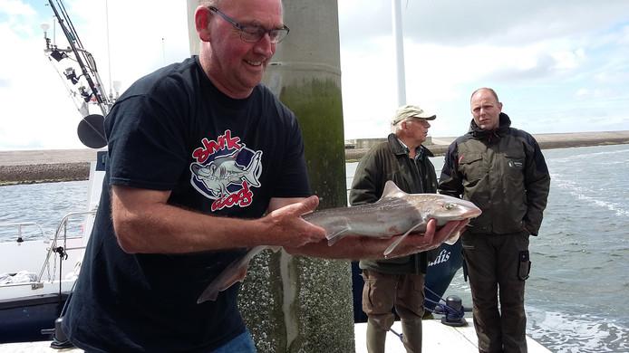Zes gevlekte gladde haaien werden gevangen.