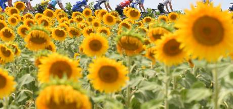 Wildcards Tour de France voor teams Slagter en Quintana