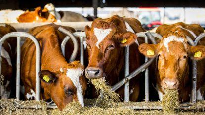 Colruyt koopt voortaan vlees rechtstreeks bij de boeren aan