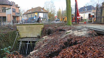 Ondergrond Kruikenburg-park onderspoeld: gemeente laat nog 2 oude beuken vellen