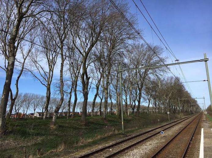 De provincie wil alle bomen langs de Vogeldijk tussen Middelburg en Oost-Souburg in fasen vervangen.