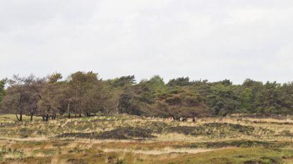 Aanhoudende droogte verhoogt brandrisico in meerdere Vlaamse natuurgebieden