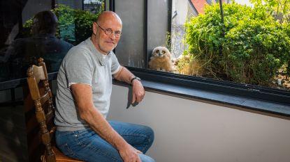 """Oehoe! Grootste uilensoort in Europa bouwt nest met drie kuikens op vensterbank van Jos: """"Ze kijken 's avonds mee televisie"""""""