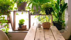 Heeft je kamerplant gele bladeren? Met deze tips hou je hem toch in leven