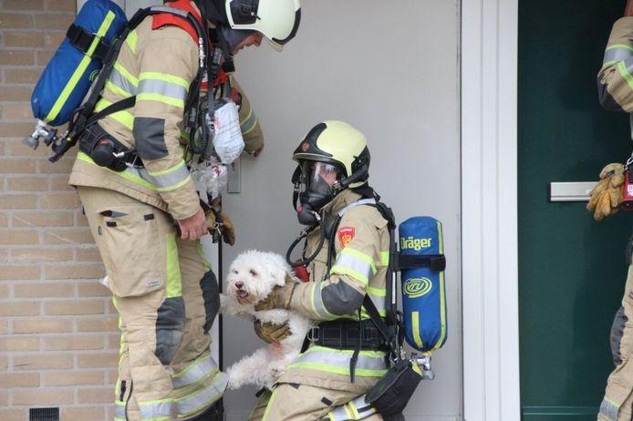 Brandweermannen met de geredde hond.