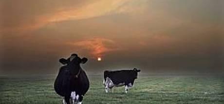 'Eigen koe eerst' in Gendt