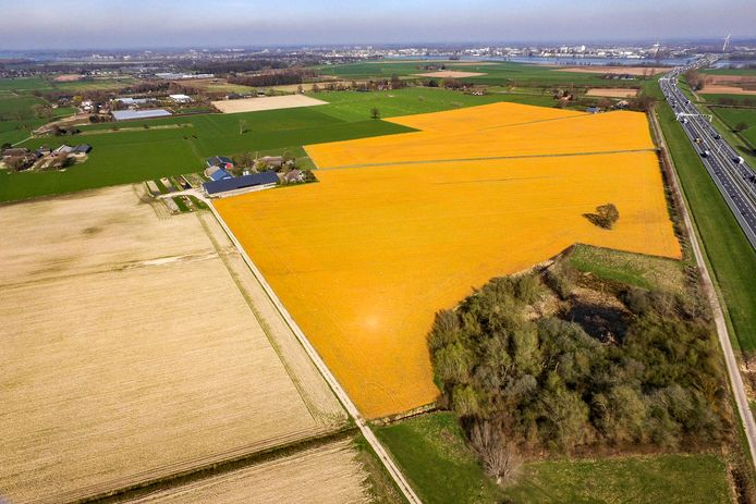 Een met onkruidverdelger glyfosaat bewerkt stuk grond langs de A1, in Wilp bij Deventer.