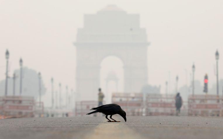 Een kraai bij het monument India Gate in New Delhi.  Beeld null