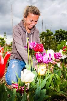 Laatste kans! Alleen dit weekend kun je nog een boeket bloemen plukken bij Plukhoek Mookhoek