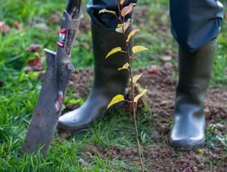 1.300 extra bomen dankzij geboortes en adopties